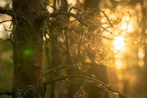 Sunset in the forest - Captured by Nikita Zakharkin